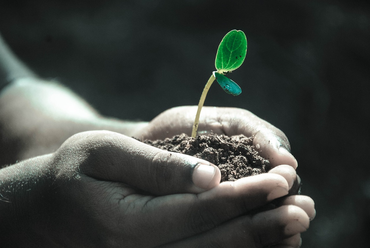 Hand cupping seedling